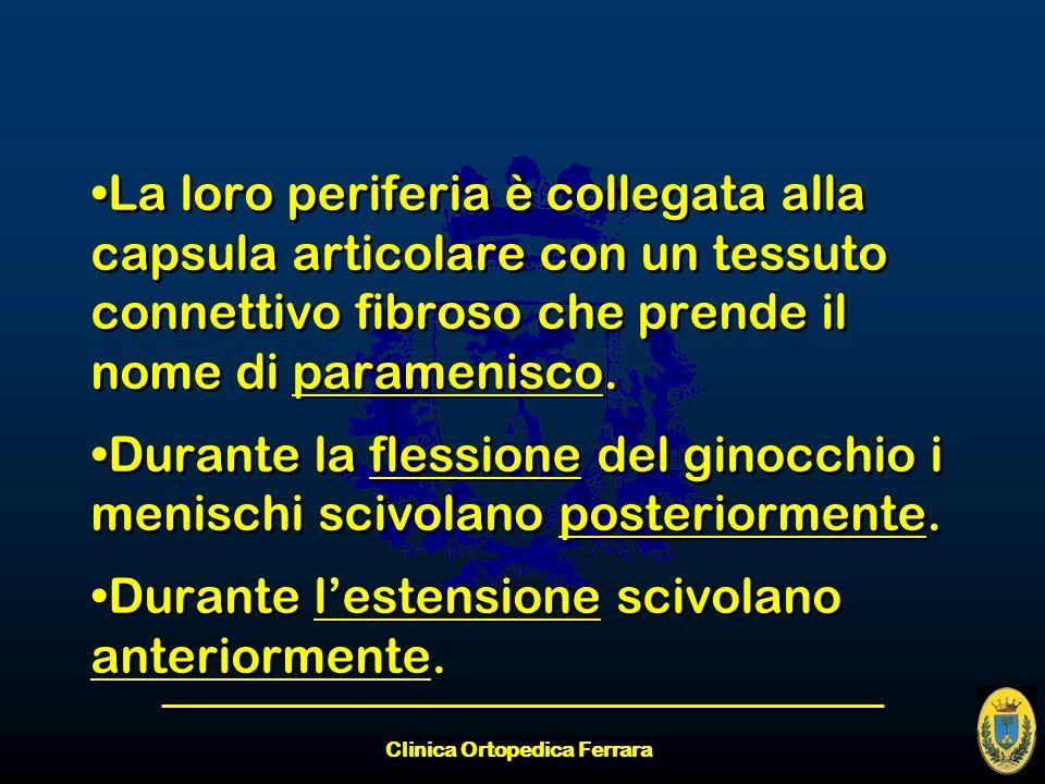 Clinica Ortopedica Ferrara La loro periferia è collegata alla capsula articolare con un tessuto connettivo fibroso che prende il nome di paramenisco.