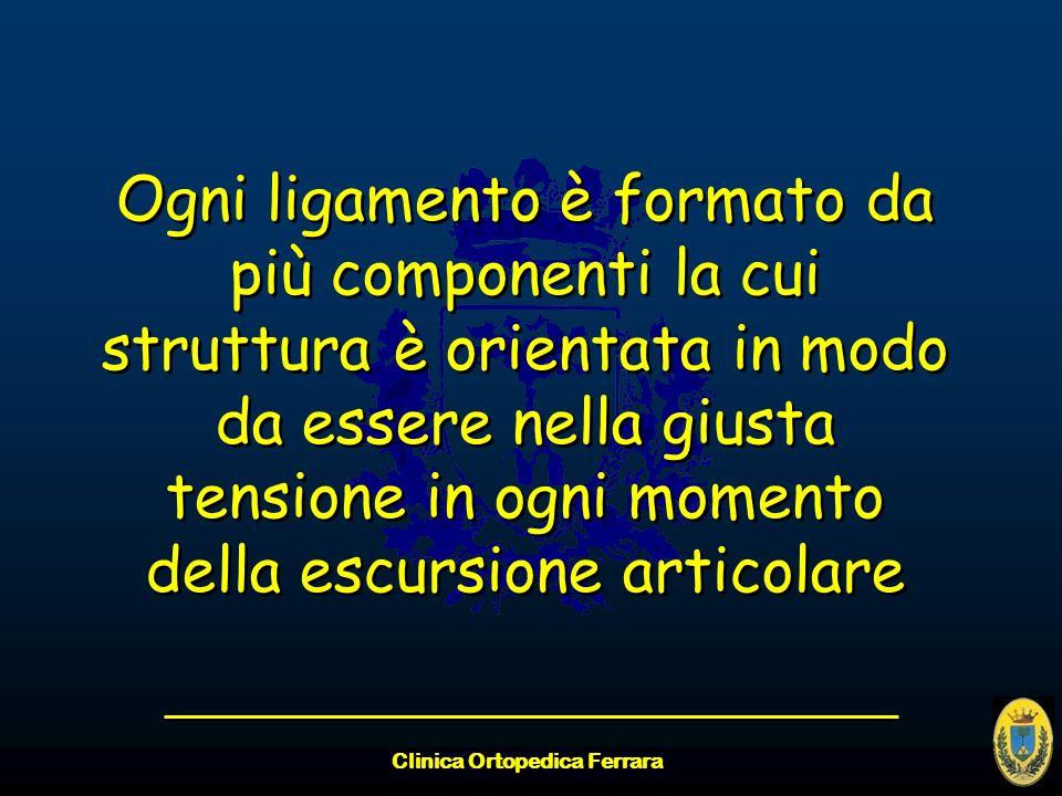 Clinica Ortopedica Ferrara Ogni ligamento è formato da più componenti la cui struttura è orientata in modo da essere nella giusta tensione in ogni mom