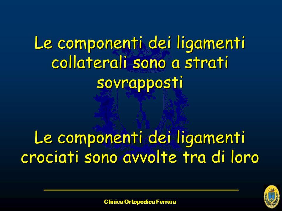 Clinica Ortopedica Ferrara Le componenti dei ligamenti collaterali sono a strati sovrapposti Le componenti dei ligamenti crociati sono avvolte tra di