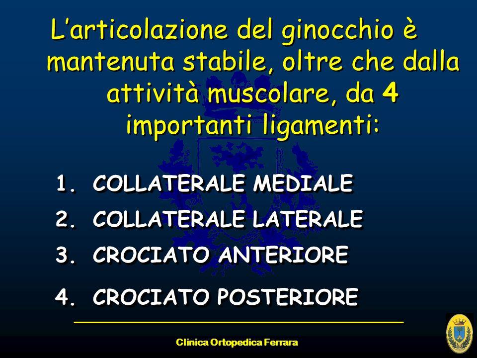 Clinica Ortopedica Ferrara Larticolazione del ginocchio è mantenuta stabile, oltre che dalla attività muscolare, da 4 importanti ligamenti: 1.COLLATER