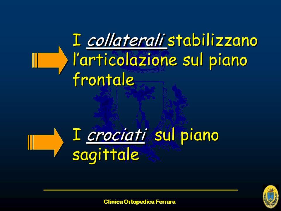 Clinica Ortopedica Ferrara collaterali I collaterali stabilizzano larticolazione sul piano frontale crociati I crociati sul piano sagittale collateral