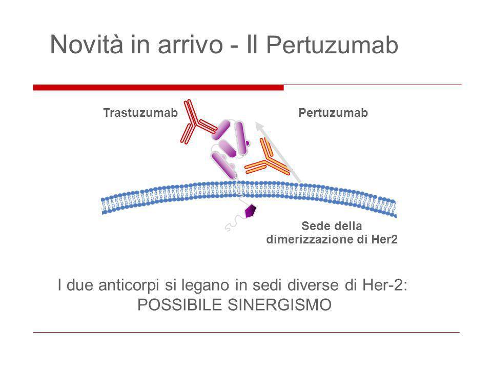 Novità in arrivo - Il Pertuzumab TrastuzumabPertuzumab Sede della dimerizzazione di Her2 I due anticorpi si legano in sedi diverse di Her-2: POSSIBILE