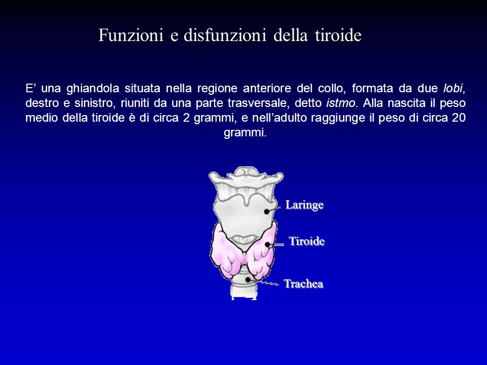 Funzioni e disfunzioni della tiroide E una ghiandola situata nella regione anteriore del collo, formata da due lobi, destro e sinistro, riuniti da una