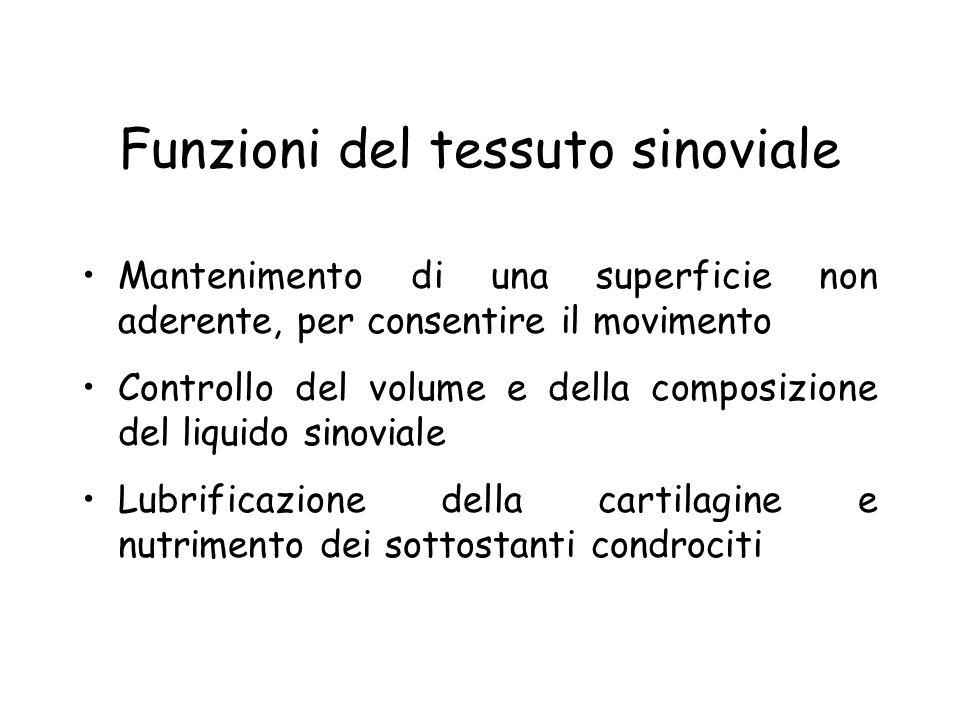 Funzioni del tessuto sinoviale Mantenimento di una superficie non aderente, per consentire il movimento Controllo del volume e della composizione del