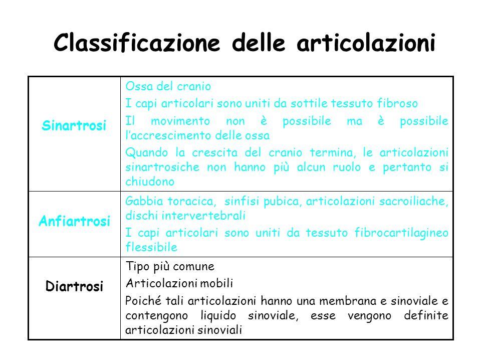 Classificazione delle articolazioni Tipo più comune Articolazioni mobili Poiché tali articolazioni hanno una membrana e sinoviale e contengono liquido