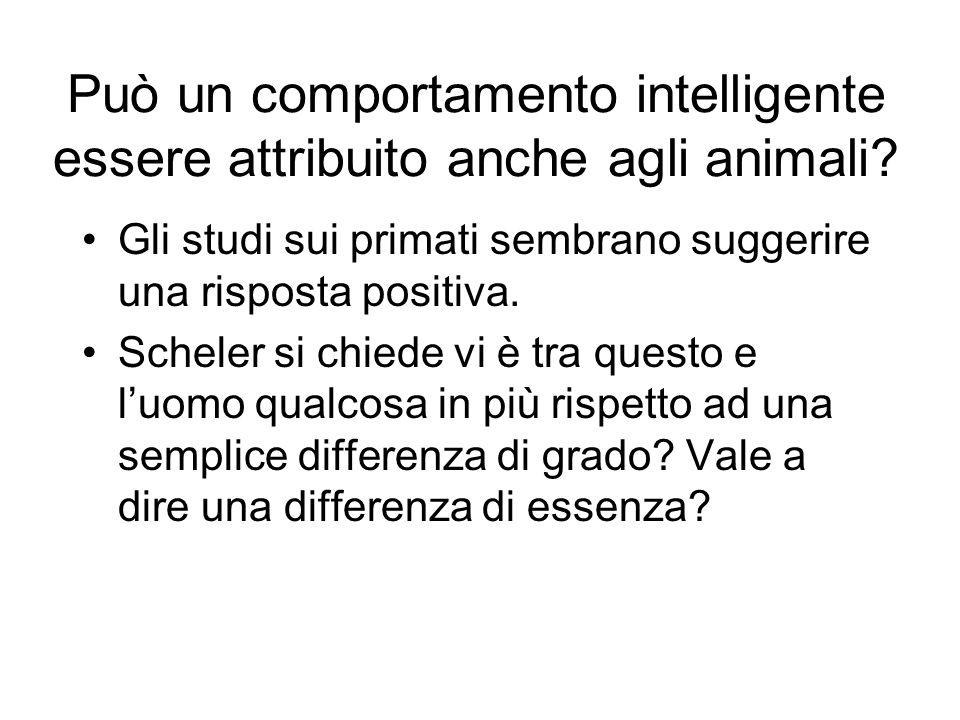 Può un comportamento intelligente essere attribuito anche agli animali? Gli studi sui primati sembrano suggerire una risposta positiva. Scheler si chi
