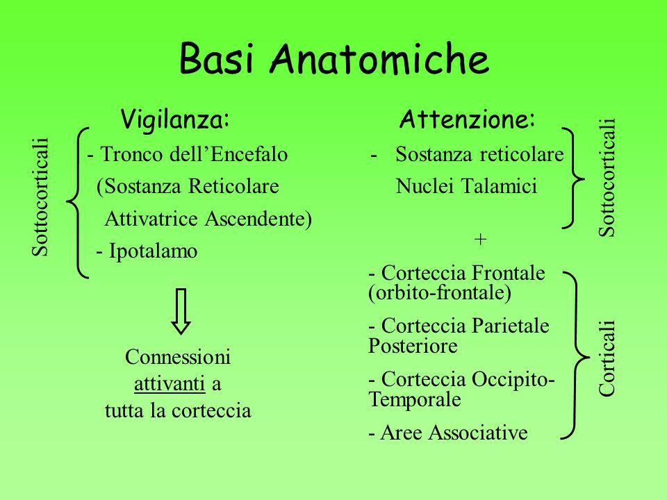Basi Anatomiche Vigilanza: - Tronco dellEncefalo (Sostanza Reticolare Attivatrice Ascendente) - Ipotalamo Attenzione: -Sostanza reticolare Nuclei Tala