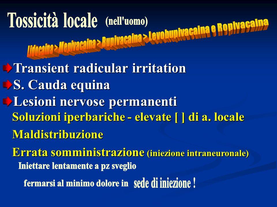 Transient radicular irritation S. Cauda equina Lesioni nervose permanenti Soluzioni iperbariche - elevate [ ] di a. locale Soluzioni iperbariche - ele