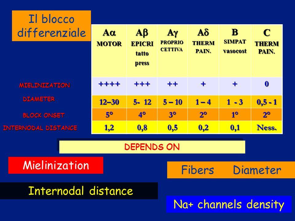 AMOTOR AEPICRItattopress APROPRIOCETTIVA ATHERM PAIN. B SIMPAT vasocostC THERM PAIN. +++++++++++0 12–30 5- 12 5 – 10 1 – 4 1 - 3 0,5 - 1 5°4°3°2°1°2°