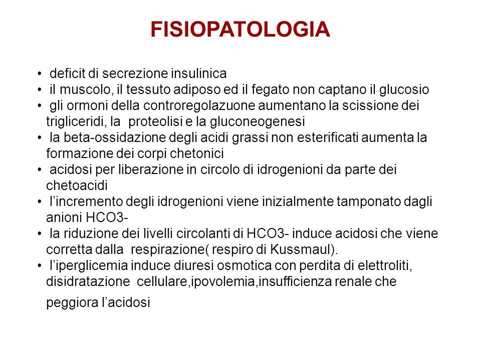 deficit di secrezione insulinica il muscolo, il tessuto adiposo ed il fegato non captano il glucosio gli ormoni della controregolazuone aumentano la s