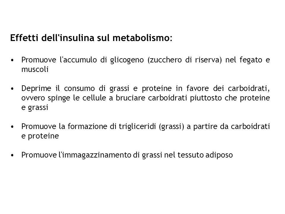 Effetti dell'insulina sul metabolismo: Promuove l'accumulo di glicogeno (zucchero di riserva) nel fegato e muscoli Deprime il consumo di grassi e prot