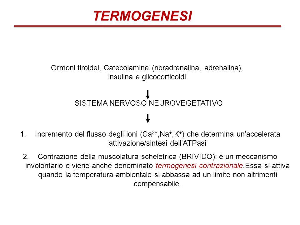 Ormoni tiroidei, Catecolamine (noradrenalina, adrenalina), insulina e glicocorticoidi 1.Incremento del flusso degli ioni (Ca 2+,Na +,K + ) che determi