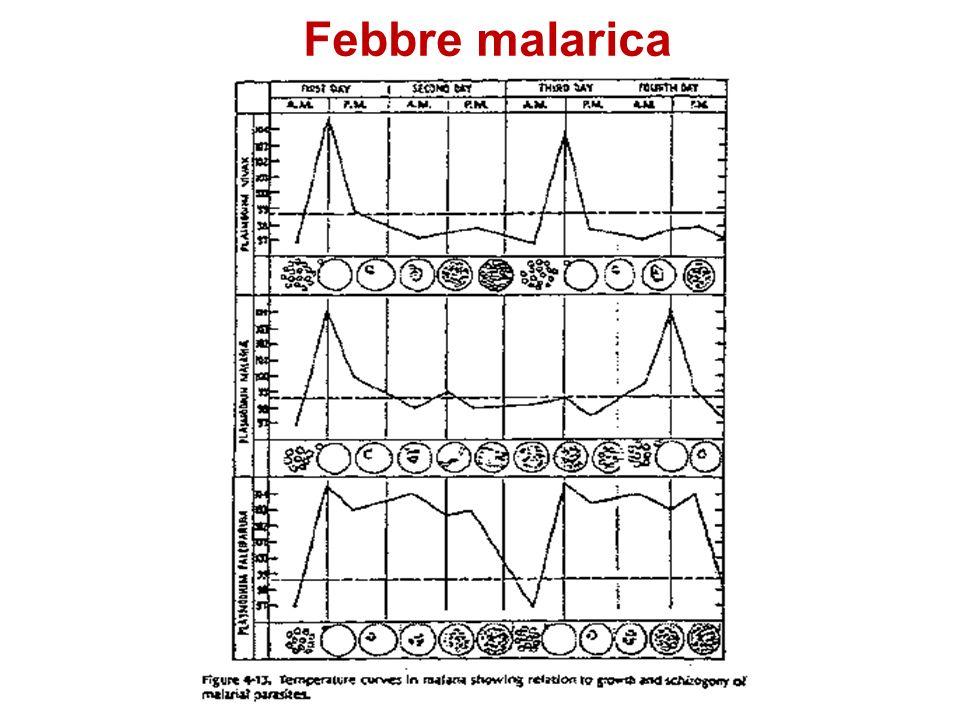 Febbre malarica