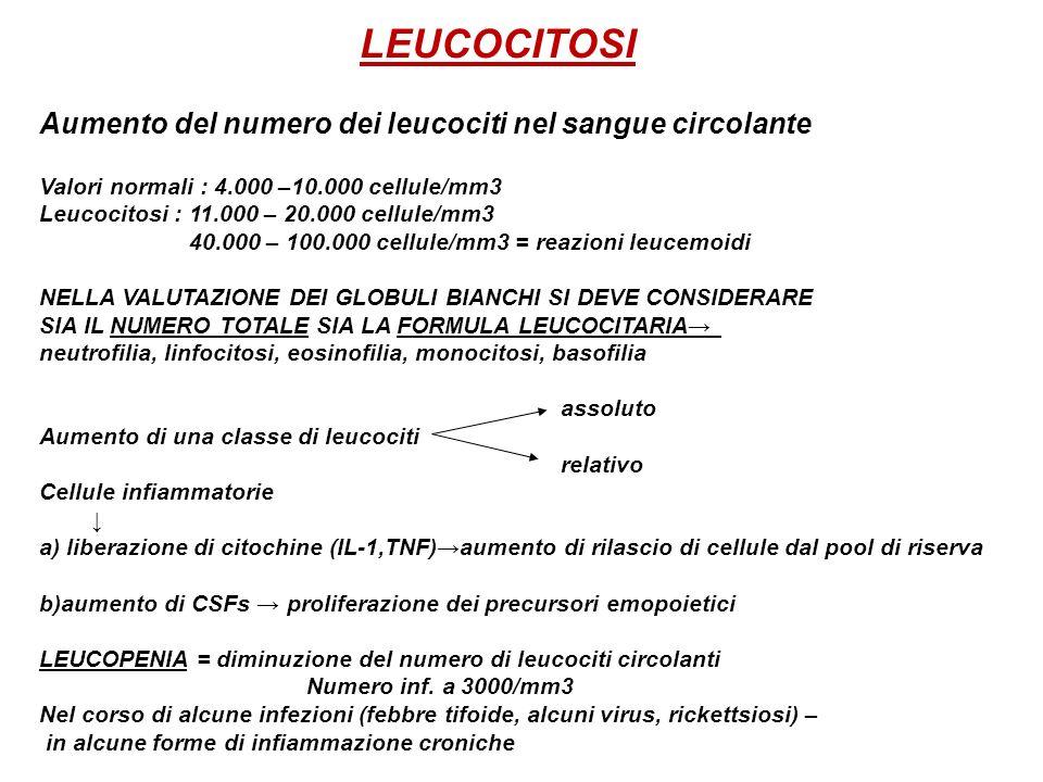 Aumento del numero dei leucociti nel sangue circolante Valori normali : 4.000 –10.000 cellule/mm3 Leucocitosi : 11.000 – 20.000 cellule/mm3 40.000 – 1
