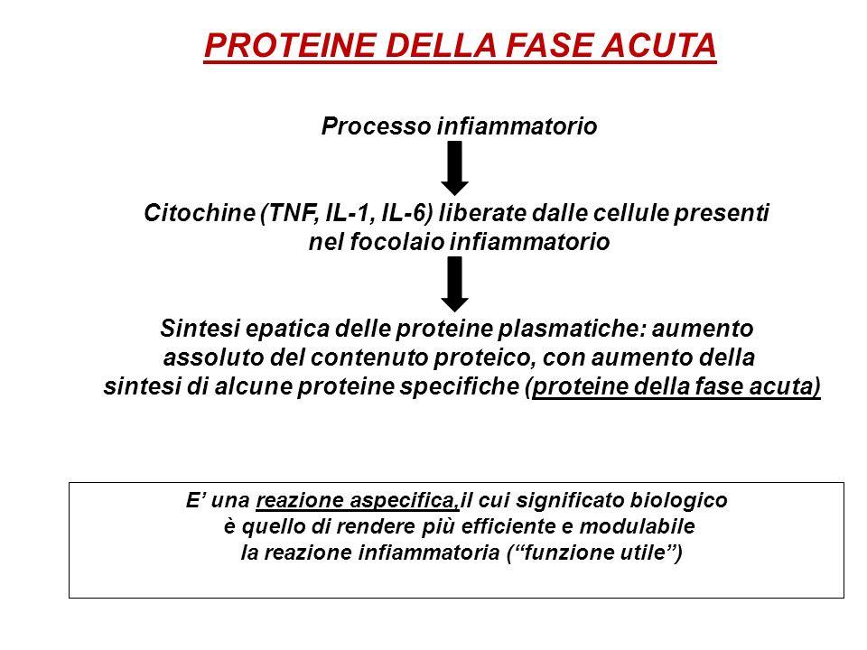 Processo infiammatorio Citochine (TNF, IL-1, IL-6) liberate dalle cellule presenti nel focolaio infiammatorio Sintesi epatica delle proteine plasmatic