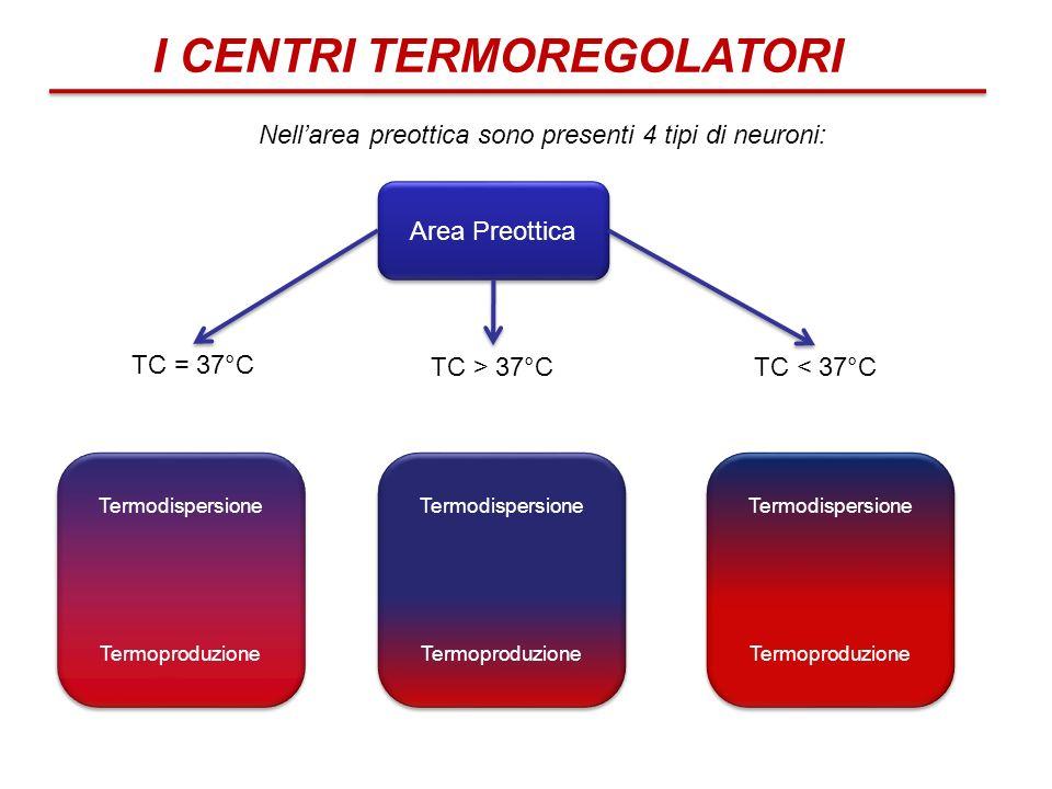 I CENTRI TERMOREGOLATORI Nellarea preottica sono presenti 4 tipi di neuroni: TC = 37°C TC > 37°CTC < 37°C Area Preottica Termodispersione Termoproduzi