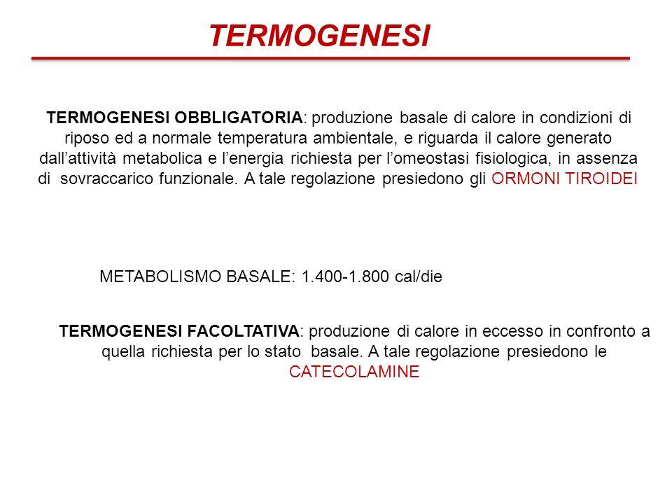 TERMOGENESI OBBLIGATORIA: produzione basale di calore in condizioni di riposo ed a normale temperatura ambientale, e riguarda il calore generato dalla