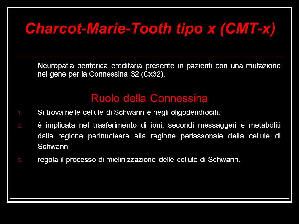 Charcot-Marie-Tooth tipo x (CMT-x) Neuropatia periferica ereditaria presente in pazienti con una mutazione nel gene per la Connessina 32 (Cx32). Ruolo