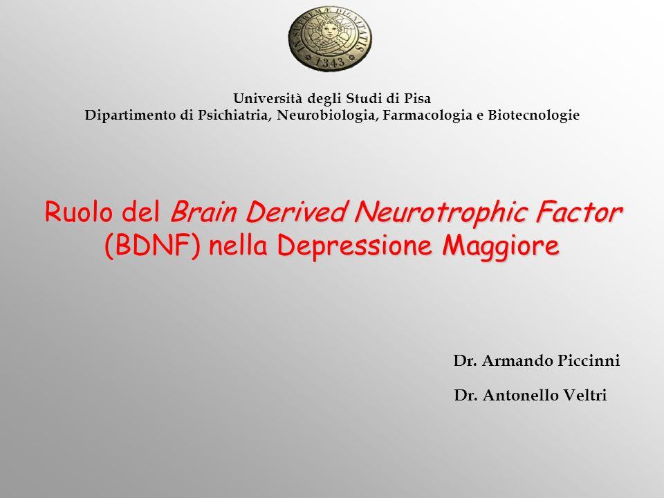 Ruolo del Brain Derived Neurotrophic Factor (BDNF) nella Depressione Maggiore Università degli Studi di Pisa Dipartimento di Psichiatria, Neurobiologi