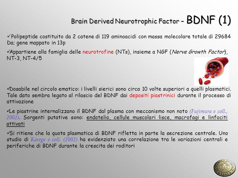 Brain Derived Neurotrophic Factor – BDNF (2) Attraverso il legame al recettore TrkB attiva una cascata trasduzionale che attraverso CREB induce lespressione di geni anti-apoptotici (Bcl-2) Produzione attività-dipendente (controllo dellespressione genica ad opera del fattore di trascrizione CREB-cAMP Response Element Binding protein)