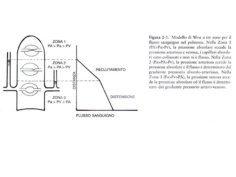 Ventilazione Il grado di distensione del polmone è, come il flusso sanguigno, distribuito in maniera non uniforme.
