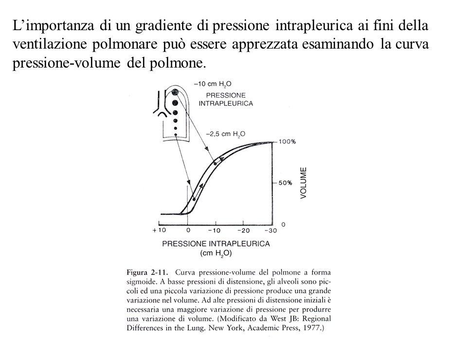 Rapporto Ventilazione-Perfusione La funzione primaria del polmone è lo scambio gassoso; cioè, il sangue scarsamente ossigenato deve essere portato a contatto dellossigeno.