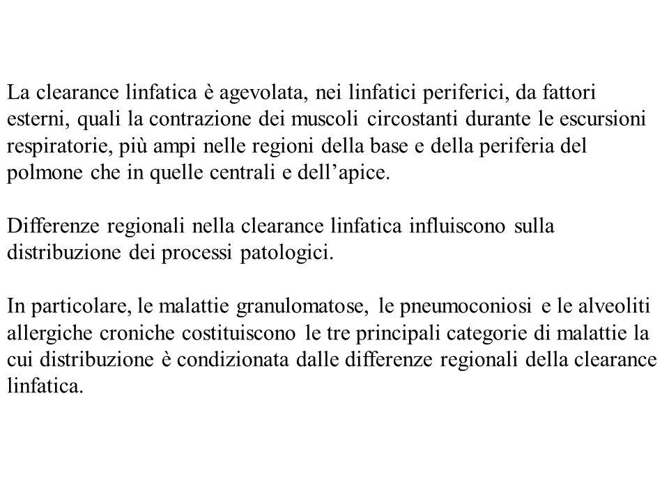 Effetti Metabolici Le concentrazioni di O2 e CO2 sono diverse regionalmente a causa delle differenze nel rapporto V/Q.
