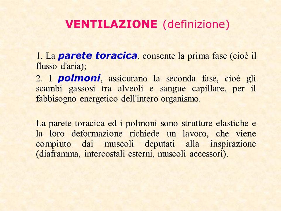 VENTILAZIONE (definizione) 1. La parete toracica, consente la prima fase (cioè il flusso d'aria); 2. I polmoni, assicurano la seconda fase, cioè gli s
