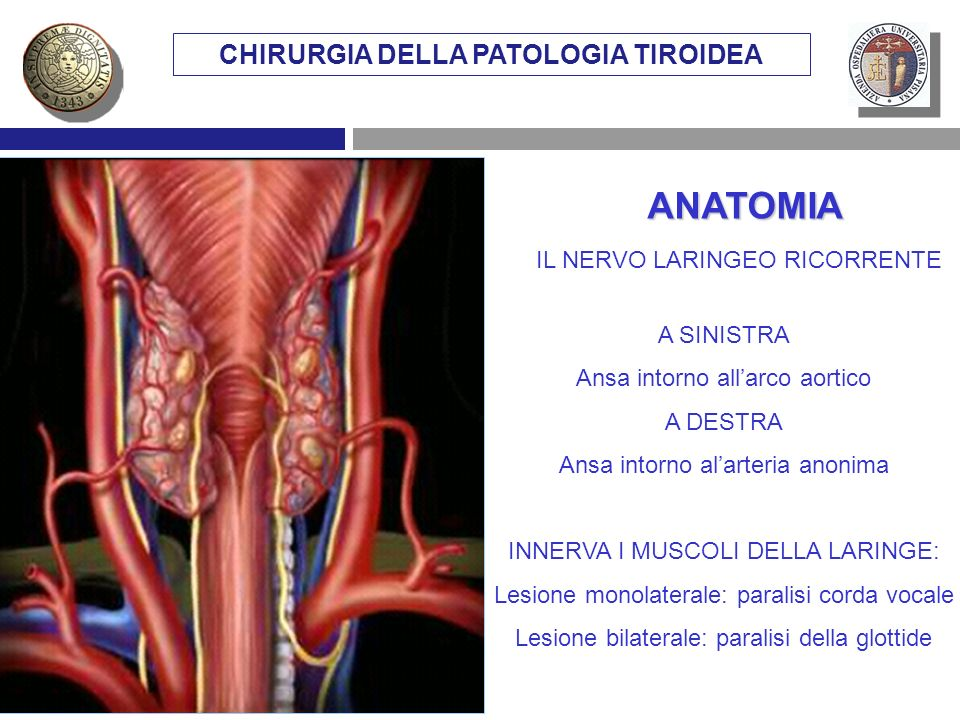 CHIRURGIA DELLA PATOLOGIA TIROIDEA A SINISTRA Ansa intorno allarco aortico A DESTRA Ansa intorno alarteria anonima INNERVA I MUSCOLI DELLA LARINGE: Le