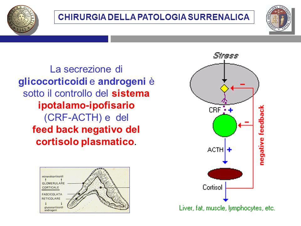 La secrezione di glicocorticoidi e androgeni è sotto il controllo del sistema ipotalamo-ipofisario (CRF-ACTH) e del feed back negativo del cortisolo p