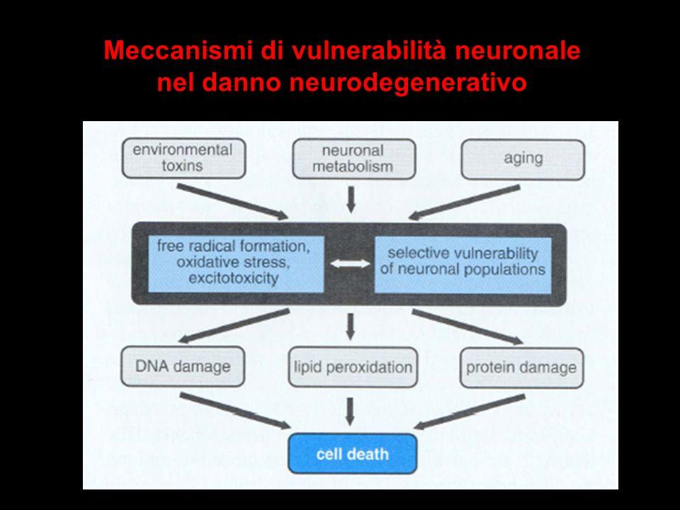 Meccanismi di vulnerabilità neuronale nel danno neurodegenerativo