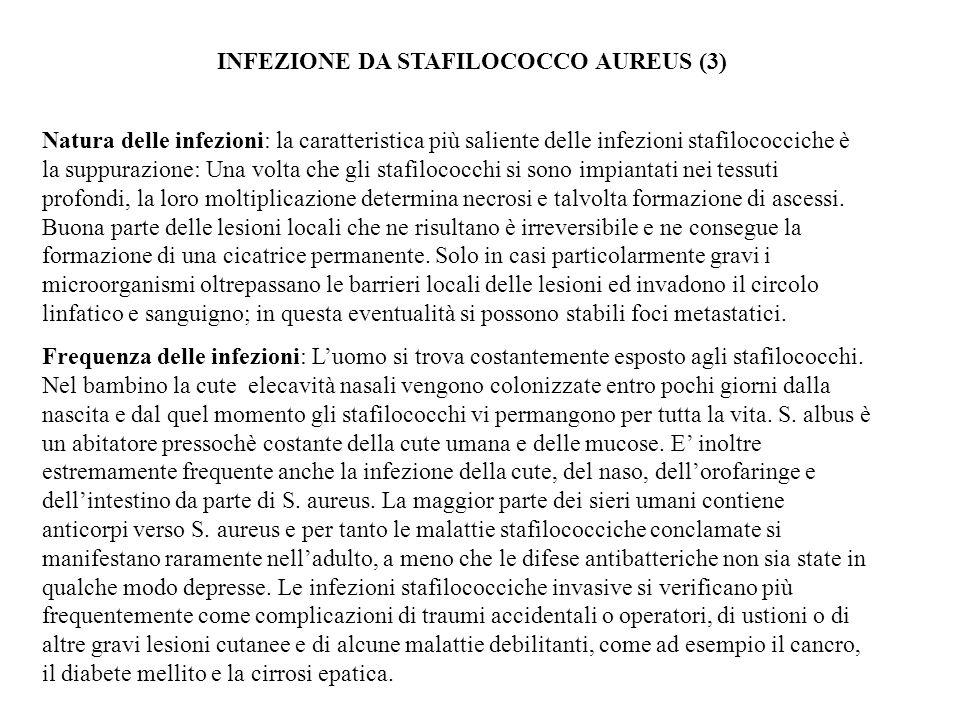 INFEZIONE DA STAFILOCOCCO AUREUS (3) Natura delle infezioni: la caratteristica più saliente delle infezioni stafilococciche è la suppurazione: Una vol