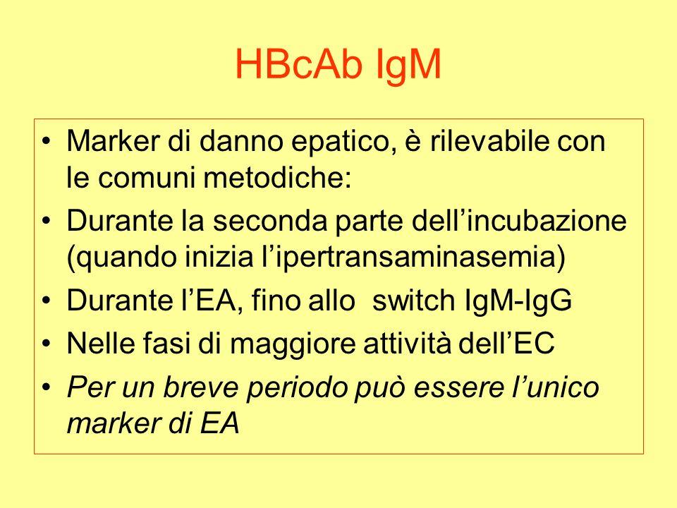 HBcAb IgM Marker di danno epatico, è rilevabile con le comuni metodiche: Durante la seconda parte dellincubazione (quando inizia lipertransaminasemia) Durante lEA, fino allo switch IgM-IgG Nelle fasi di maggiore attività dellEC Per un breve periodo può essere lunico marker di EA