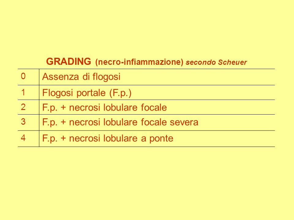GRADING (necro-infiammazione) secondo Scheuer 0 Assenza di flogosi 1 Flogosi portale (F.p.) 2 F.p.