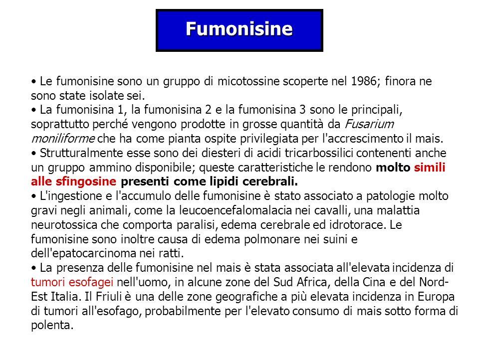 Fumonisine Le fumonisine sono un gruppo di micotossine scoperte nel 1986; finora ne sono state isolate sei.