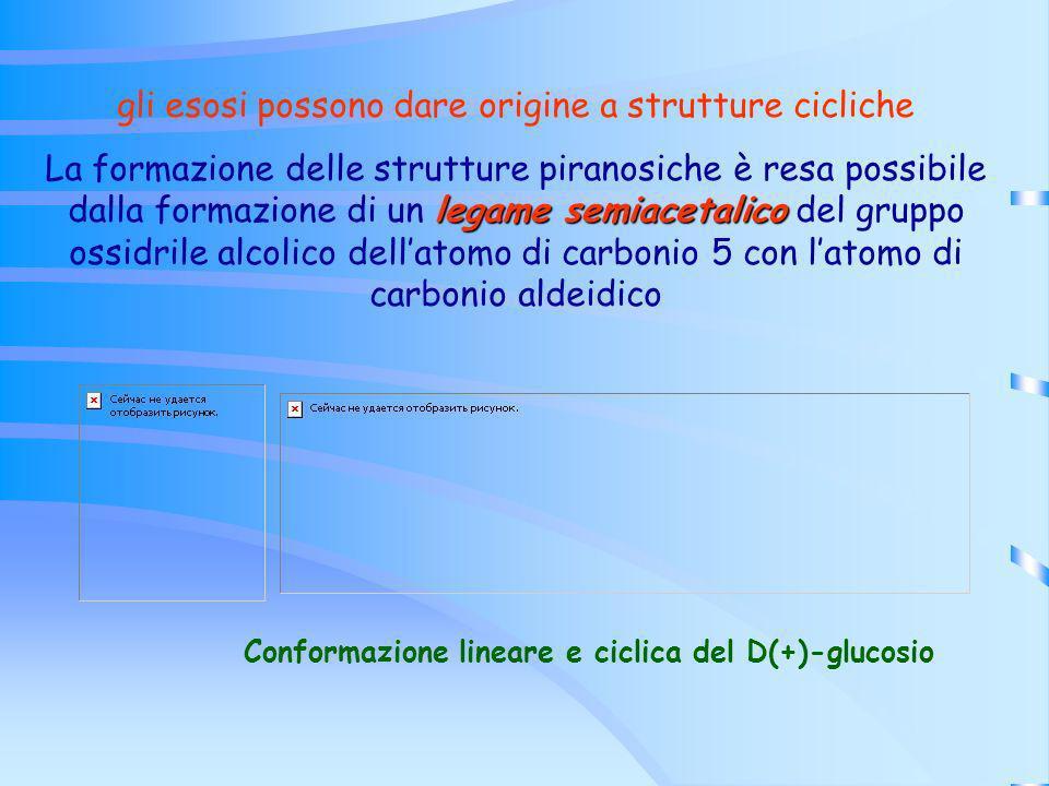 Conformazione lineare e ciclica del D(+)-glucosio gli esosi possono dare origine a strutture cicliche legame semiacetalico La formazione delle struttu