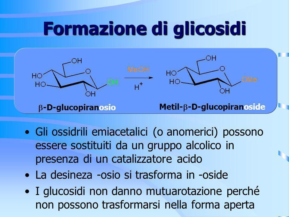 Formazione di glicosidi Gli ossidrili emiacetalici (o anomerici) possono essere sostituiti da un gruppo alcolico in presenza di un catalizzatore acido