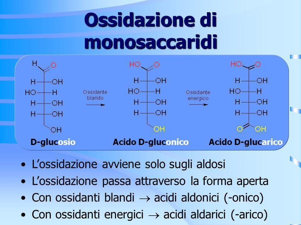 Ossidazione di monosaccaridi Lossidazione avviene solo sugli aldosi Lossidazione passa attraverso la forma aperta Con ossidanti blandi acidi aldonici
