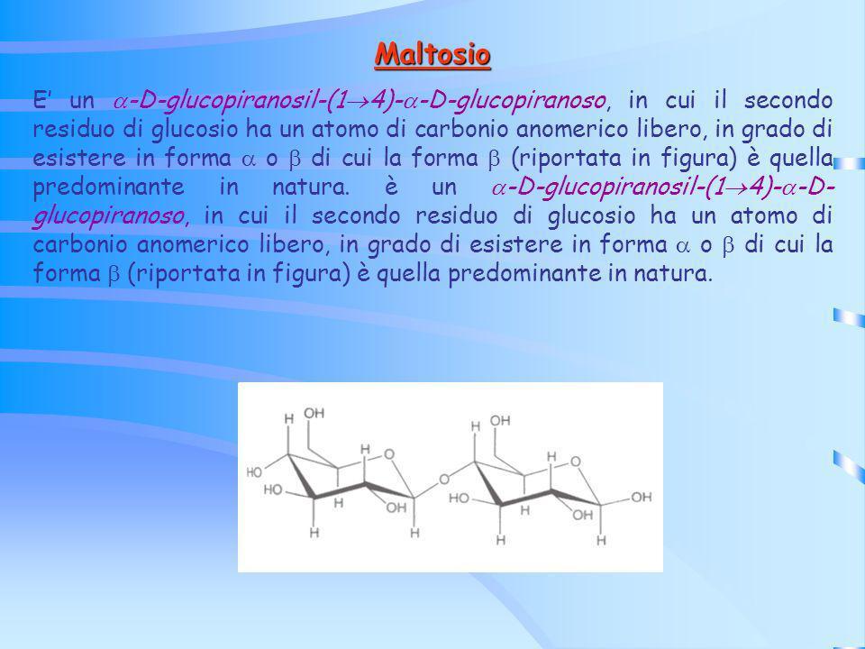 Maltosio E un -D-glucopiranosil-(1 4)- -D-glucopiranoso, in cui il secondo residuo di glucosio ha un atomo di carbonio anomerico libero, in grado di e
