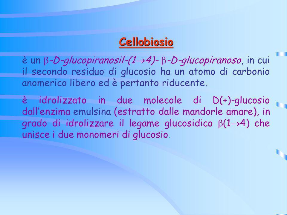 Cellobiosio è un -D-glucopiranosil-(1 4)- -D-glucopiranoso, in cui il secondo residuo di glucosio ha un atomo di carbonio anomerico libero ed è pertan