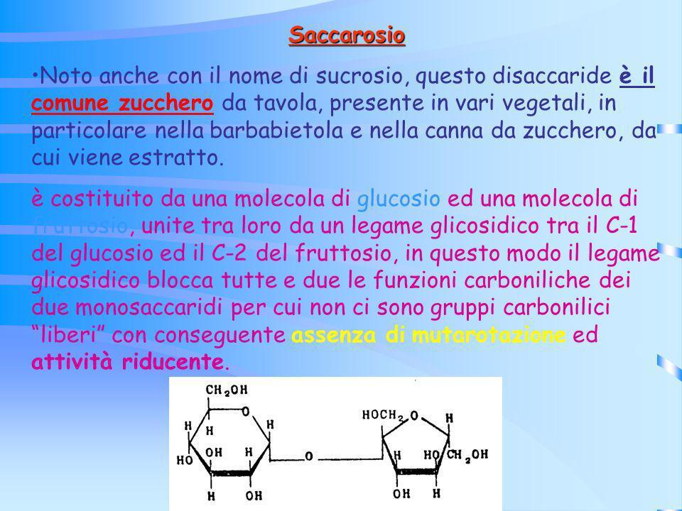 Saccarosio Noto anche con il nome di sucrosio, questo disaccaride è il comune zucchero da tavola, presente in vari vegetali, in particolare nella barb