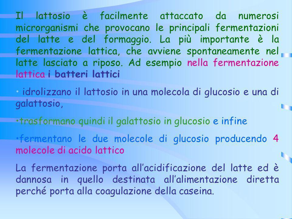 Il lattosio è facilmente attaccato da numerosi microrganismi che provocano le principali fermentazioni del latte e del formaggio. La più importante è