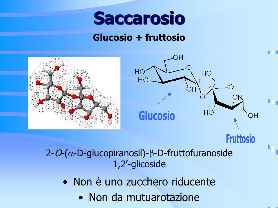 Saccarosio 2-O-( -D-glucopiranosil)- -D-fruttofuranoside 1,2-glicoside Glucosio + fruttosio Non è uno zucchero riducente Non da mutuarotazione