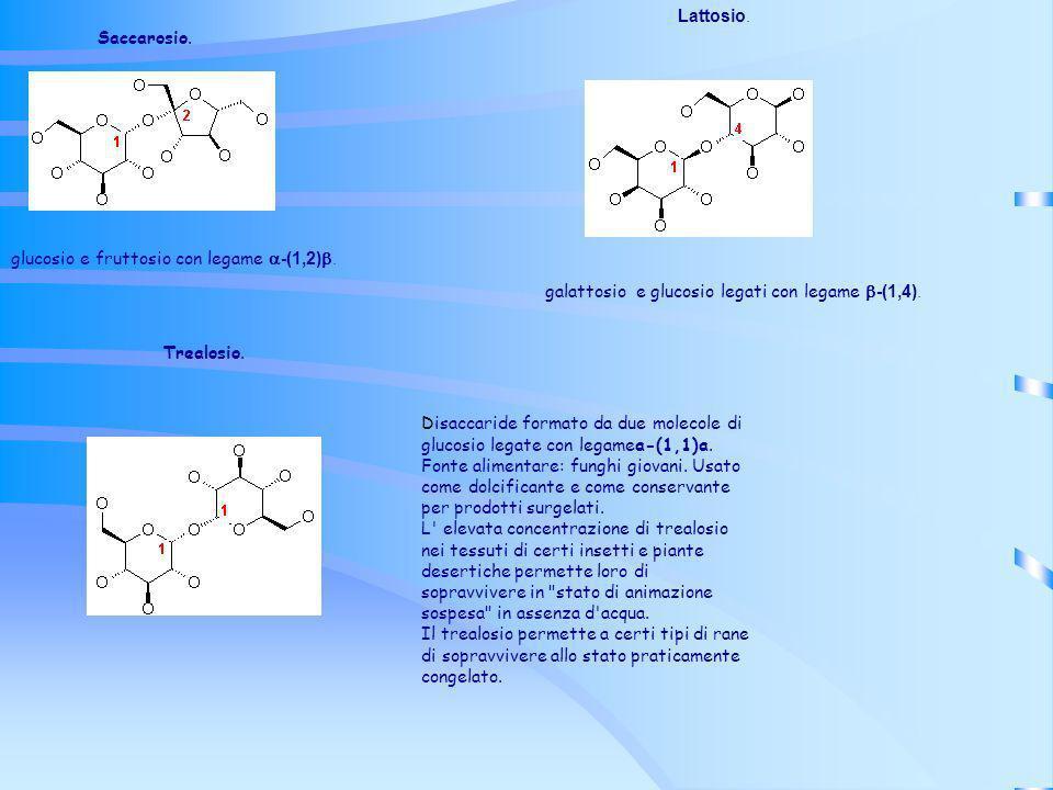 Saccarosio. glucosio e fruttosio con legame -(1,2). Lattosio. galattosio e glucosio legati con legame -(1,4). Trealosio. Disaccaride formato da due mo