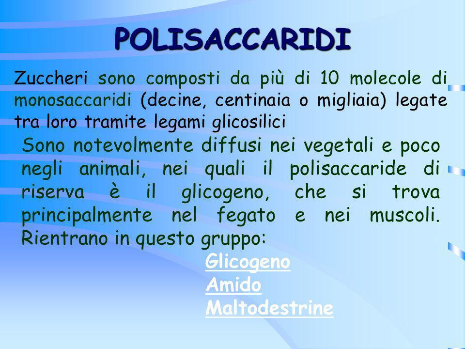 POLISACCARIDI Zuccheri sono composti da più di 10 molecole di monosaccaridi (decine, centinaia o migliaia) legate tra loro tramite legami glicosilici