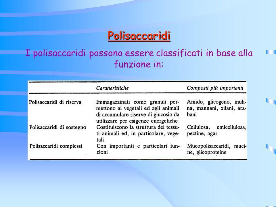 Polisaccaridi I polisaccaridi possono essere classificati in base alla funzione in: