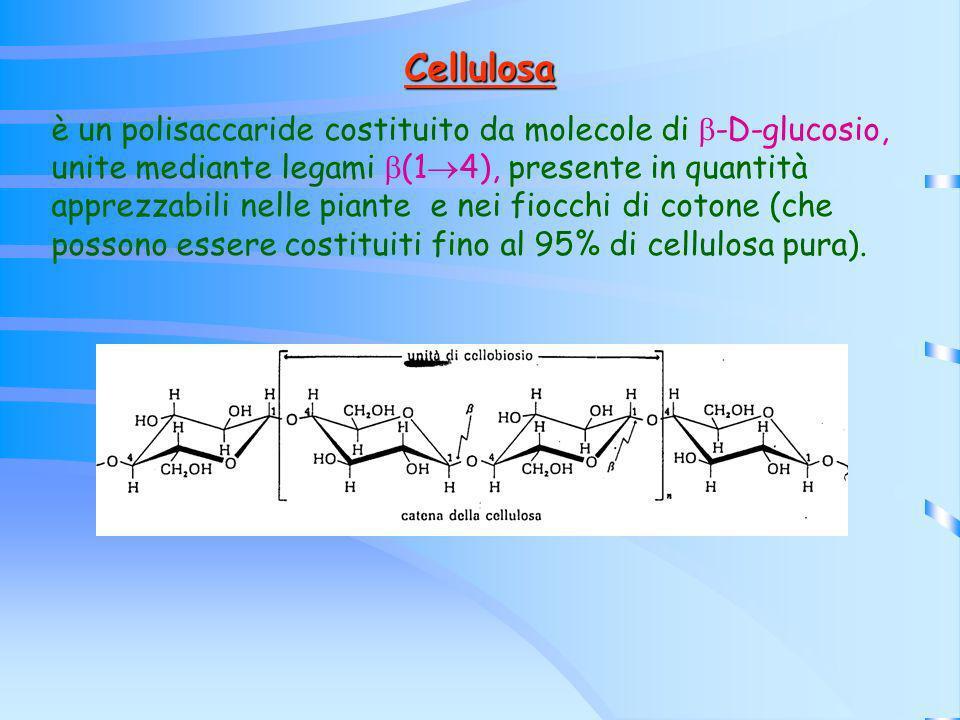 Cellulosa è un polisaccaride costituito da molecole di -D-glucosio, unite mediante legami (1 4), presente in quantità apprezzabili nelle piante e nei