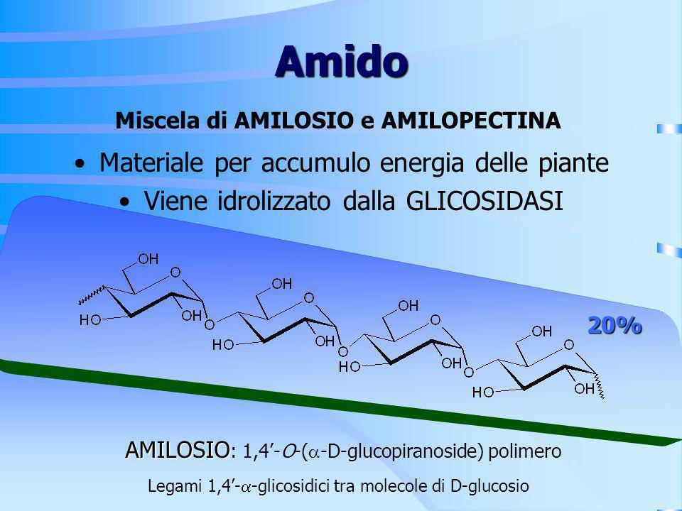 Amido Miscela di AMILOSIO e AMILOPECTINA Materiale per accumulo energia delle piante Viene idrolizzato dalla GLICOSIDASI AMILOSIO AMILOSIO : 1,4-O-( -