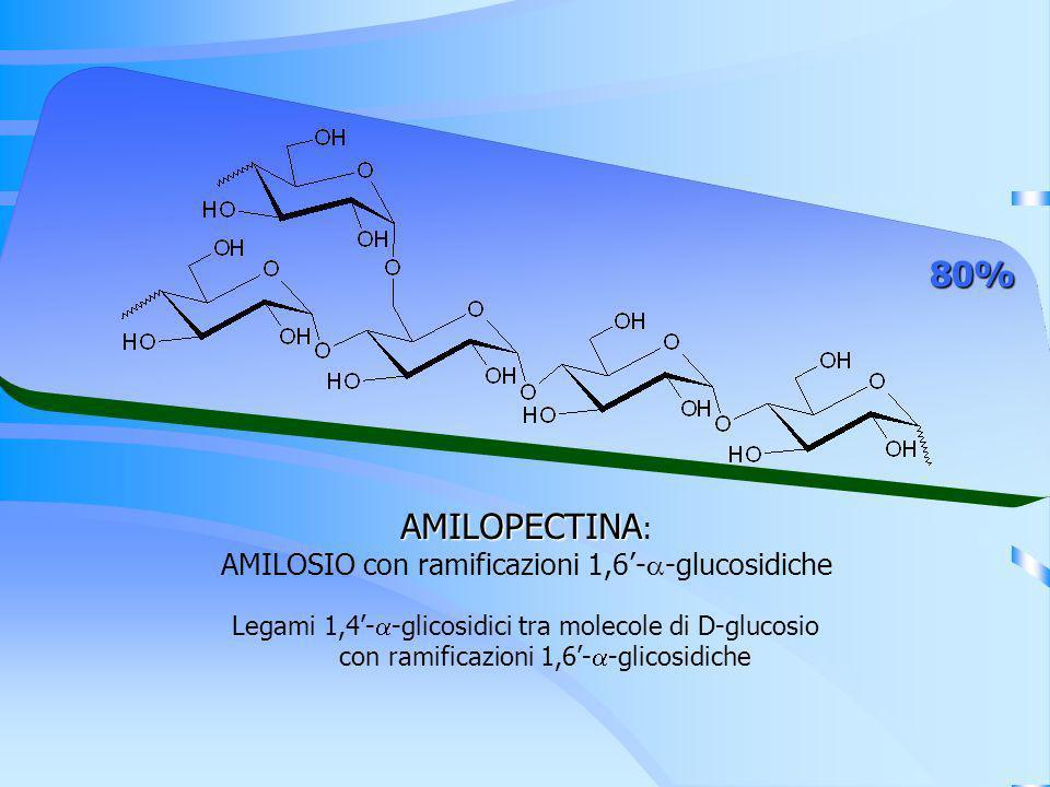 AMILOPECTINA AMILOPECTINA : AMILOSIO con ramificazioni 1,6- -glucosidiche 80% Legami 1,4- -glicosidici tra molecole di D-glucosio con ramificazioni 1,