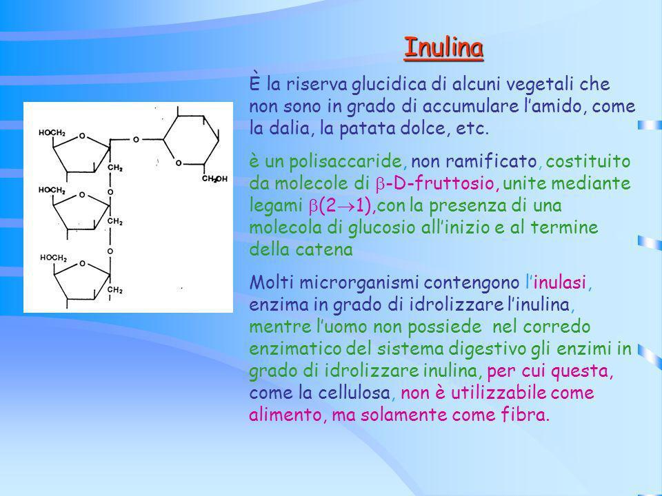 Inulina È la riserva glucidica di alcuni vegetali che non sono in grado di accumulare lamido, come la dalia, la patata dolce, etc. è un polisaccaride,